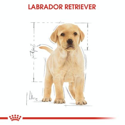 Royal Canin Labrador Retriever Puppy Yavru Köpek Maması 1