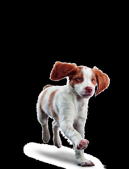 Eukanuba - Puppy Medium Breed - Facing Illustration (2019 Restage)