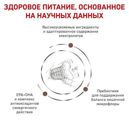 RC-VET-DRY-CatGastroFR-BrandFlagship_rus4