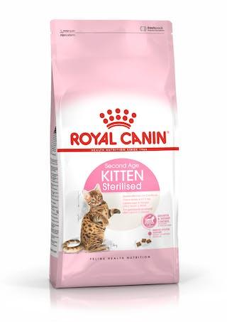 Sterilised Kitten