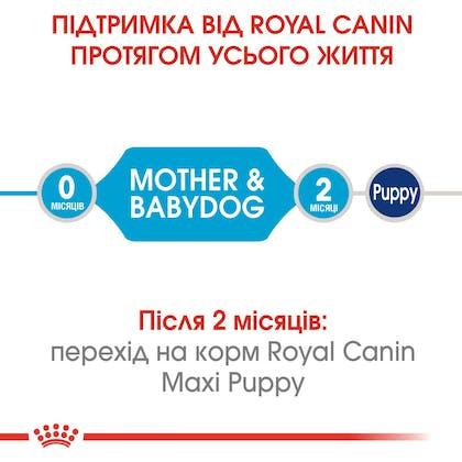 HI_SHN_MEDIUM_STARTER_MOTHER_BABYDOG_DRY_ua_1