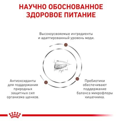 RC-VET-DRY-DogGastroPU-Eretailkit-B1_4-RU