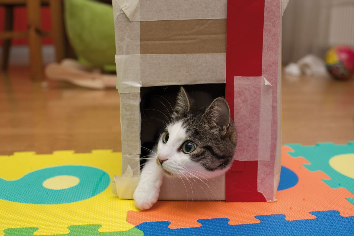 Diabetic cats should be encouraged to maintain their activity levels; both physical activity and loss of body fat can contribute to remission of the diabetic state. By enriching a cat's environment with things such as boxes, tunnels and climbing frames, the cat will be encouraged to explore its surroundings.