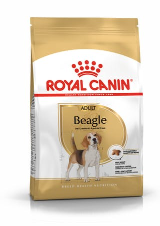 Beagle Adulto