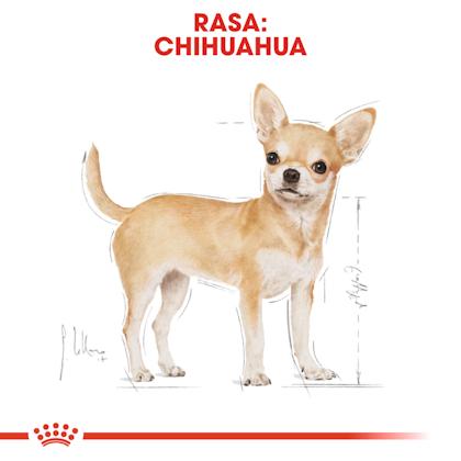 RC-BHN-Wet-Chihuahua-CV-Eretailkit-1-pl_PL