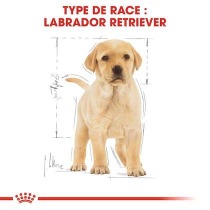 RC-BHN-PuppyLabradorRetriever-CM-EretailKit-4-fr_FR