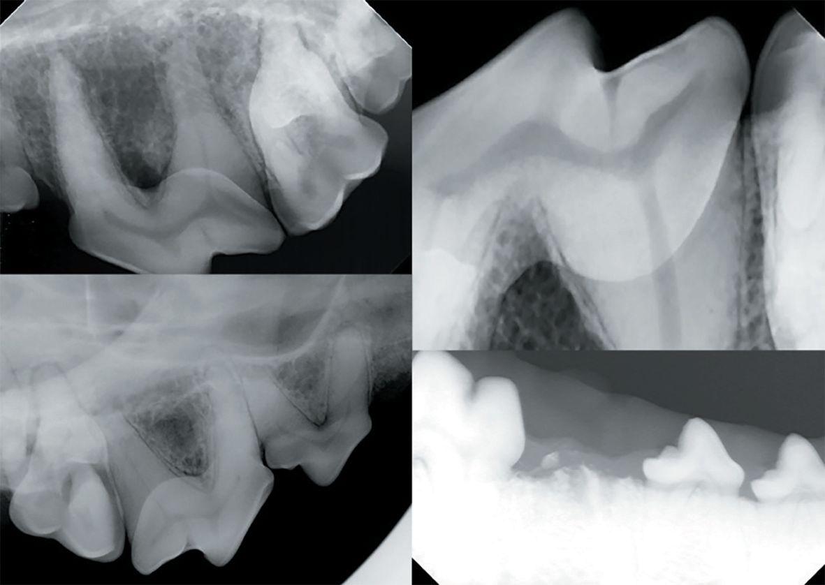 Veterinary dental radiology
