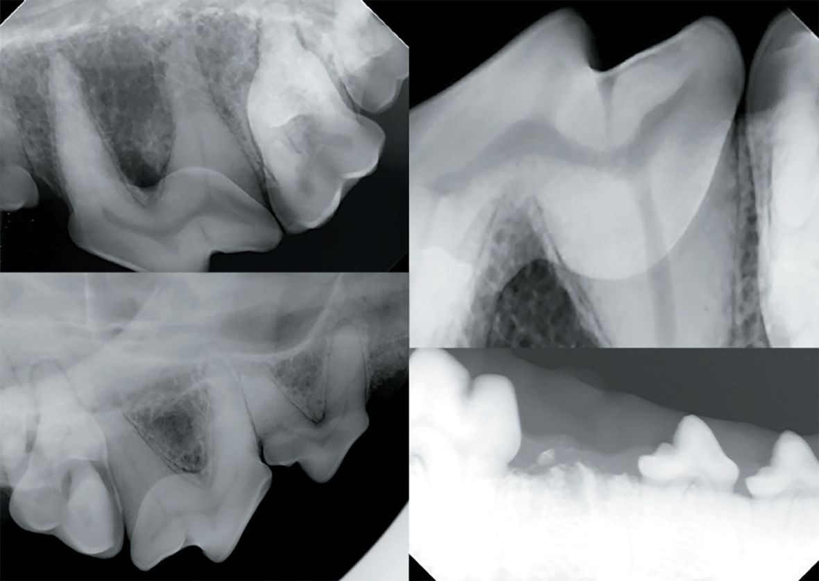 Veterinary dental radiology