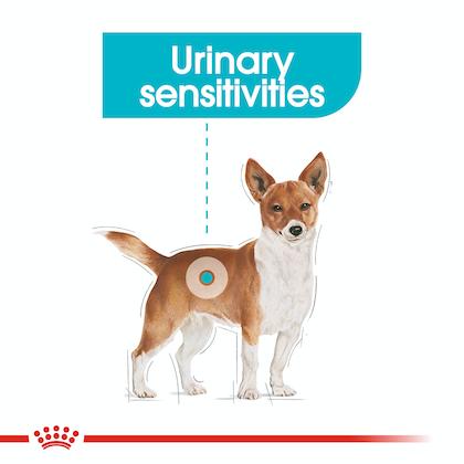 CCN-UrinaryMini-CV-Eretailkit-1
