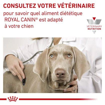 RC-VET-DRY-consult dog-fr_FR