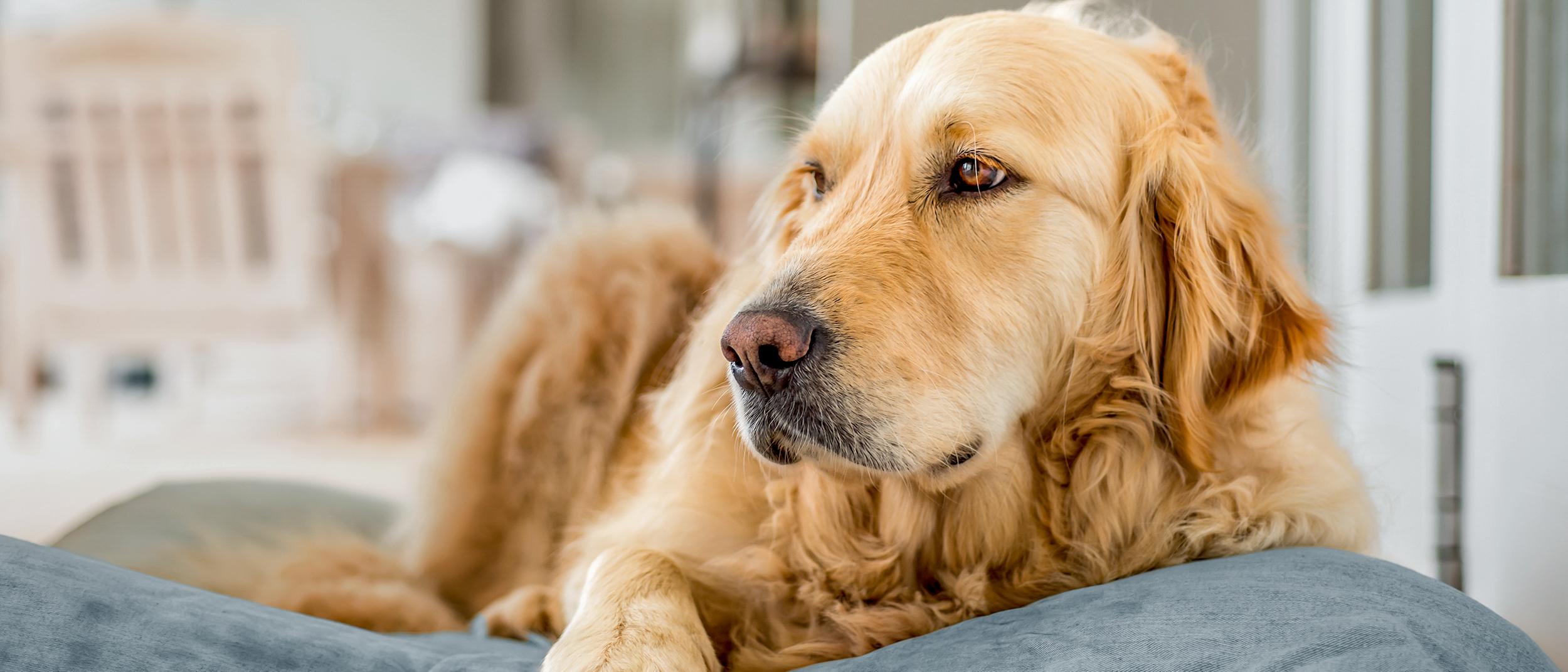 qué causa que un perro pierda peso rápidamente