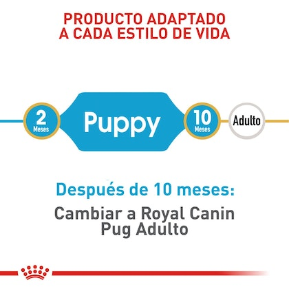 PUG PUPPY COLOMBIA 3