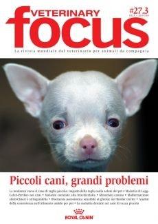 Piccoli cani, grandi problemi