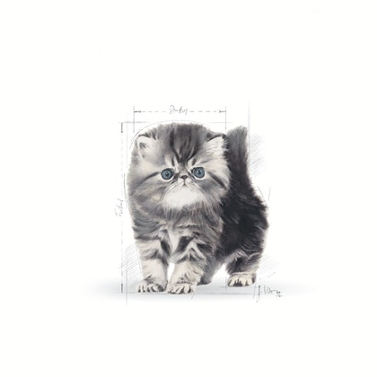 FBN - 2013 - GraphicCodes - Emblematic Cat Illustrations - PERS-KIT-FBN-ILLUSTR