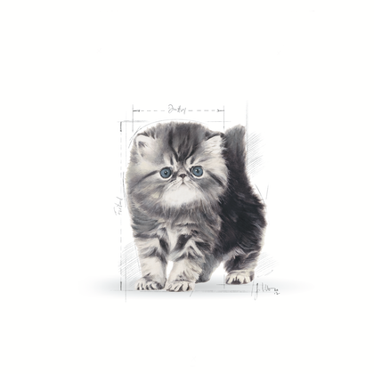 FBN - 2013 - GraphicCodes - Emblematic Cat Illustrations - PERS-KIT-FBN-ILLUSTR