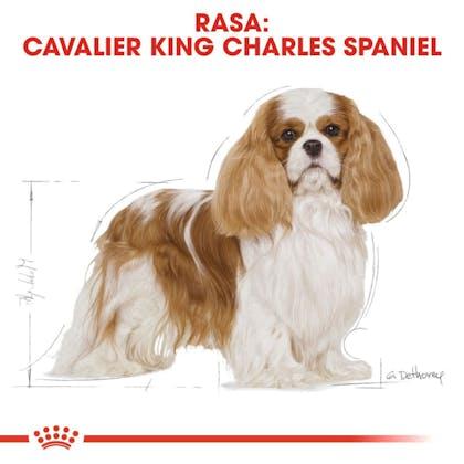 RC-BHN-CavalierKingCharles-CV-Eretailkit-1-pl_PL