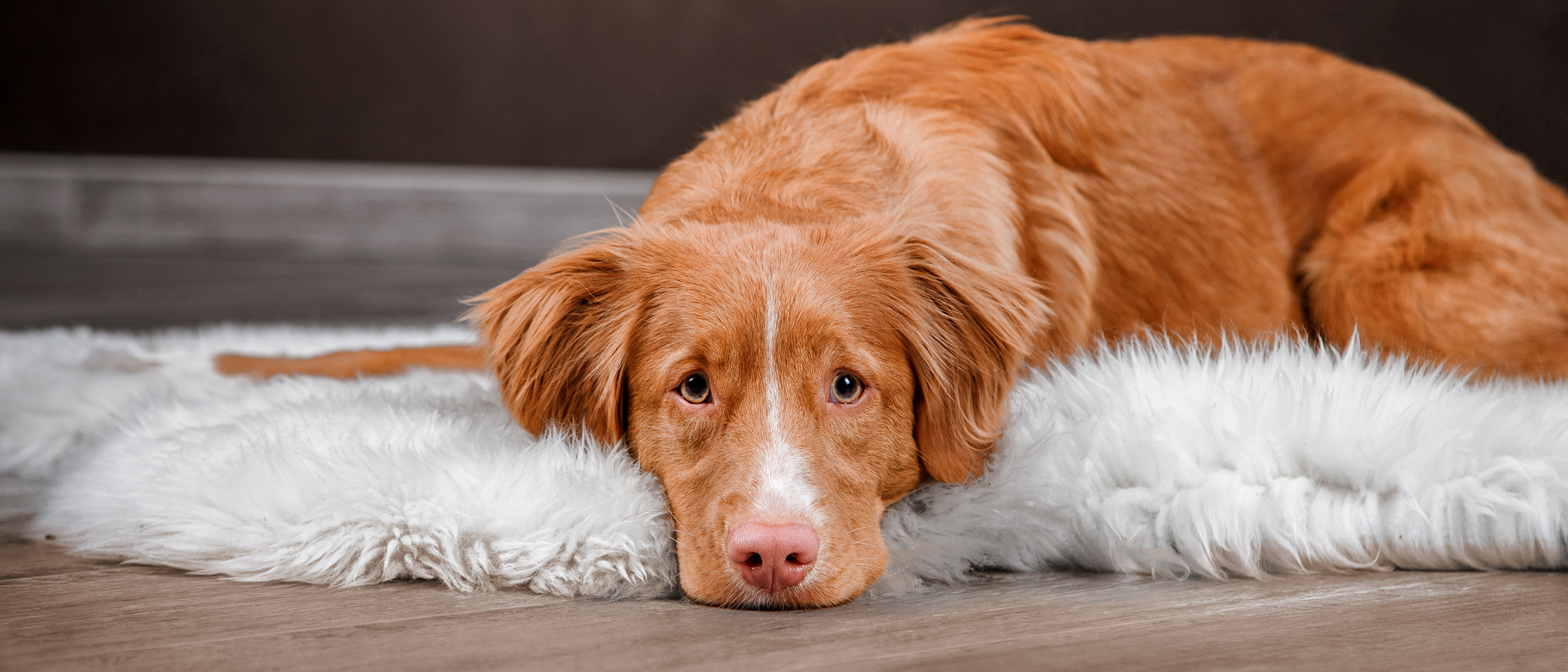Spotting signs of digestive problems in your dog -