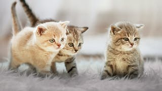 Three kittens on a white rug