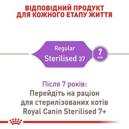 RC-FHN-Sterilised37_2-UA.jpg