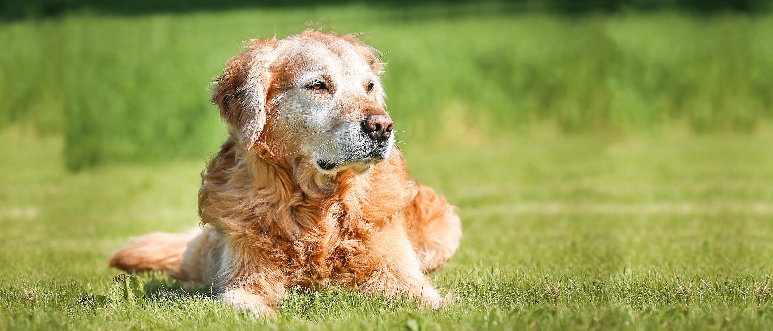minzione frequente nel cane femmina
