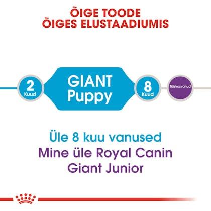 RC-SHN-PuppyGiant-CV1_015_ESTONIA-ESTONIAN