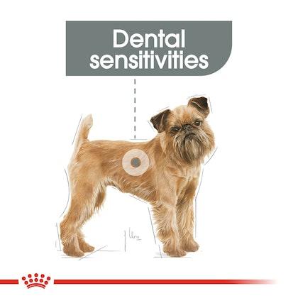 CCN-DentalMini-CV-Eretailkit-1