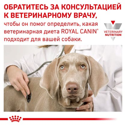 RC-VET-DRY-DogGastroLF-Eretailkit-B1_9-RU