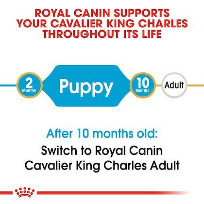 BHN-PuppyCavalierKingCharles-CV-EretailKit-1