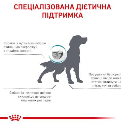 RC-VET-DRY-DogSkinCare-Eretailkit-B1_8