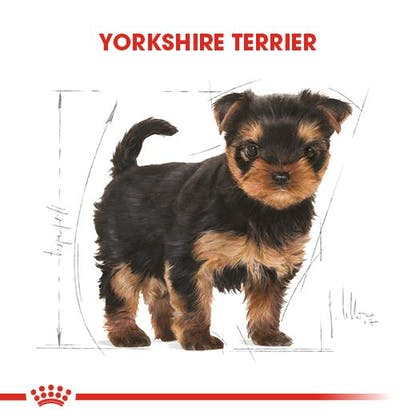 Royal Canin Yorkshire Terrier Puppy Yavru Köpek Maması 1