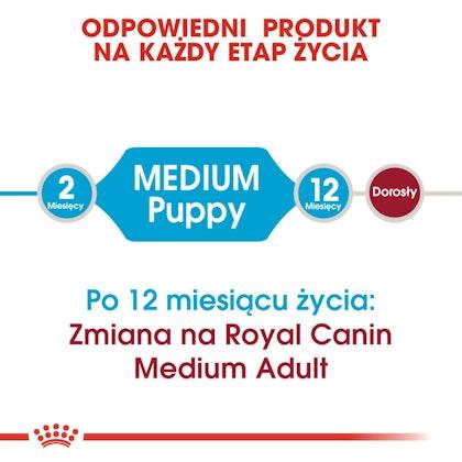 RC-SHN-Puppy-Medium-CV1_010_POLAND-POLISH