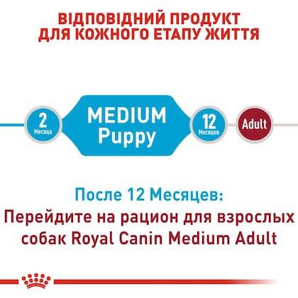 RC-SHN-PuppyMedium_2-RU.jpg
