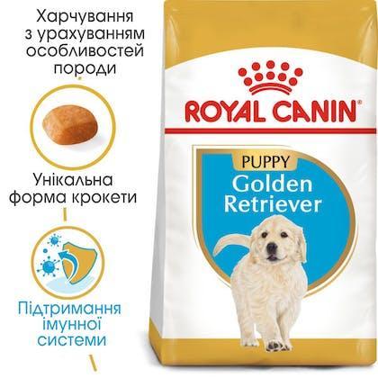 HI_BHN_GOLDEN RETRIEVER_PUPPY_ua_4