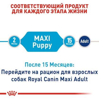 RC-SHN-PuppyMaxi_2-RU.jpg
