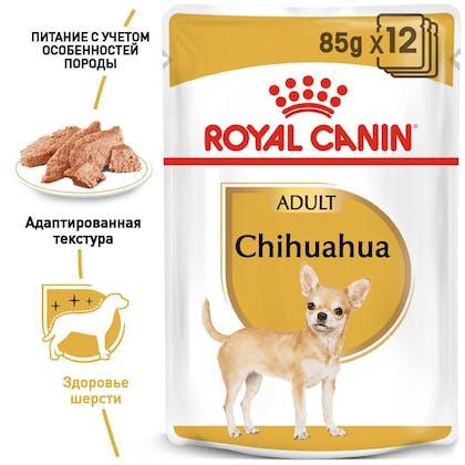 RC-BHN-Wet-Chihuahua_1-RU.jpg