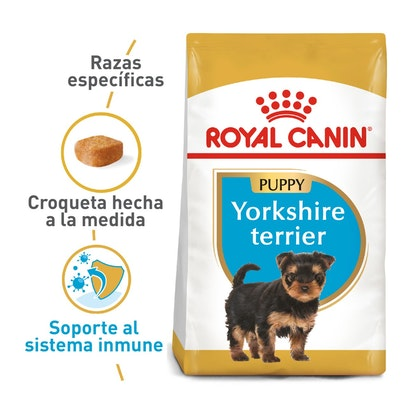 YORKSHIRE PUPPY COLOMBIA 1