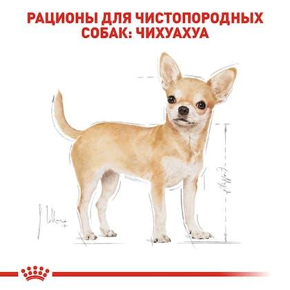 RC-BHN-Wet-Chihuahua_2-RU.jpg