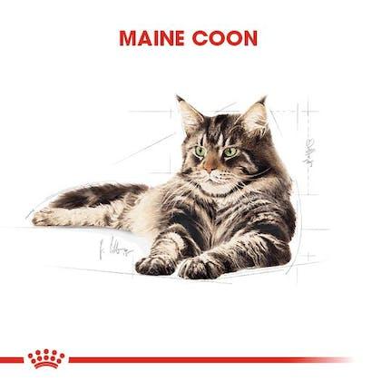 Royal Canin Maine Coon Adult Kedi Maması 1