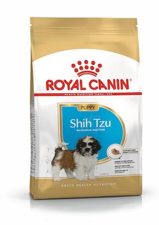 Shih-tzu Cachorro