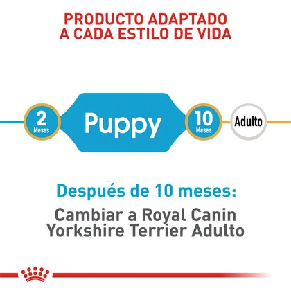 YORKSHIRE PUPPY COLOMBIA 3