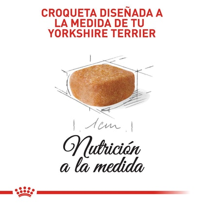 YORKSHIRE PUPPY COLOMBIA 4