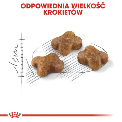 RC-FHN-Kitten-CV3_000_POLAND-POLISH