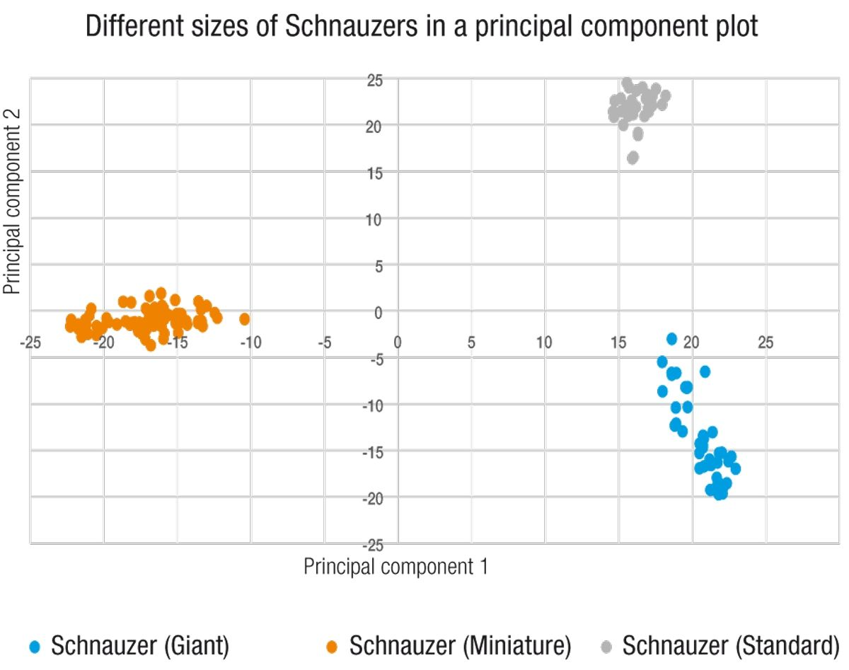 Principal Component Analysis (PCA) is an unsupervised clustering method of tested genotypes, which allows comparison of DNA similarity. Closely related samples, such as dogs within the same breed, are expected to cluster together due to similarities in their genetic makeup. This particular PCA plot illustrates the difference in the genetic signatures of the Standard, Miniature, and Giant varieties of Schnauzer, demonstrating the large amount of genetic separation that can result over the generations simply from selecting for a trait such as size.