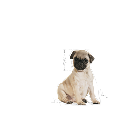PUG-JU-ILLUSTR-FACING-BHN17