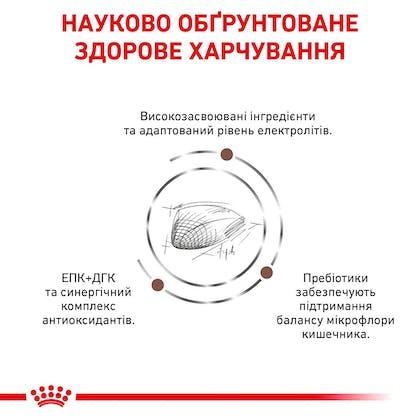 RC-VET-DRY-CatGastro-Eretailkit-B1_04-UA