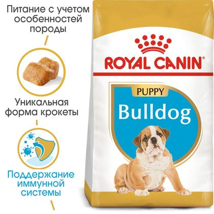 HI_BHN_BULLDOG_PUPPY_ru_4