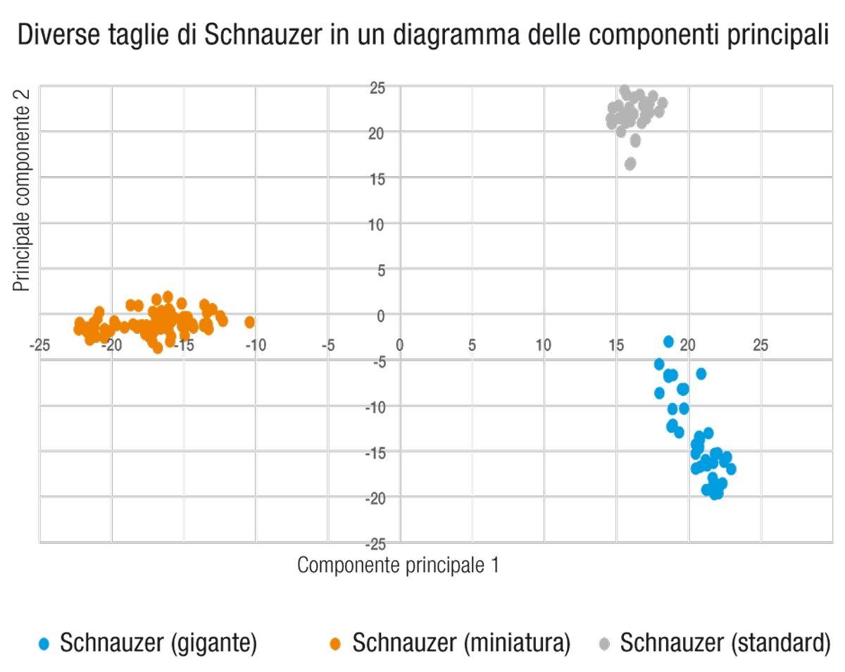 L'analisi delle componenti principali (PCA, Principal Component Analysis) è un metodo di clustering non supervisionato dei genotipi testati, che consente di confrontare la similarità del DNA. È prevedibile che i campioni strettamente collegati, come ad esempio cani della stessa razza, si aggreghino a causa delle similarità nel loro corredo genetico. Questo particolare diagramma della PCA illustra la differenza nelle firme genetiche delle varietà standard, miniatura e gigante dello Schnauzer, dimostrando il forte grado di separazione genetica che può risultare nel corso delle generazioni semplicemente dalla selezione di un tratto come la taglia.