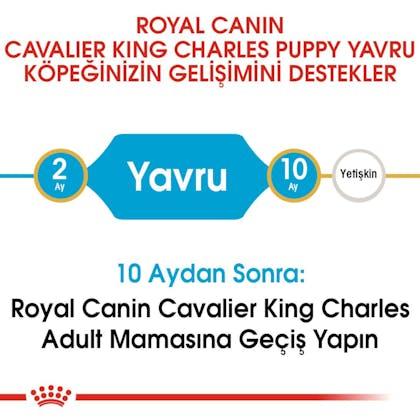 Royal Canin Cavalier King Charles Puppy Yavru Köpek Maması 4