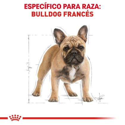 RC-BHN-FrenchBulldog-CV-Eretailkit-1