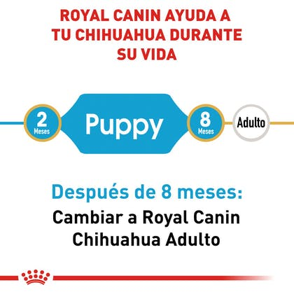 RC-BHN-PuppyChihuahua-CM-EretailKit-1